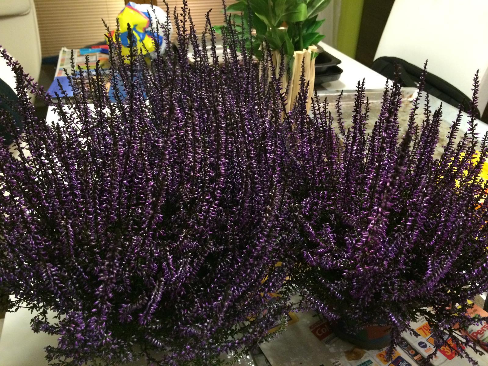 Zahradka nasa 2015 - Dalsie kusky :) zajtra sa s vresoviskom zacina :)