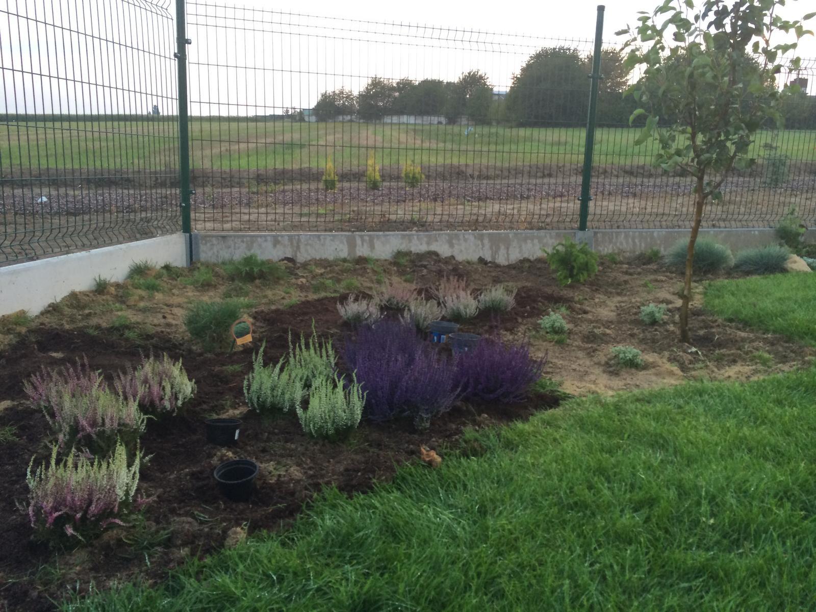 Zahradka nasa 2015 - Po presadeni som zistila ze fialove su umelo ofarbene :( cele kvetinace boli cialove od farby :( takze mame biele 4x drahsie :-/