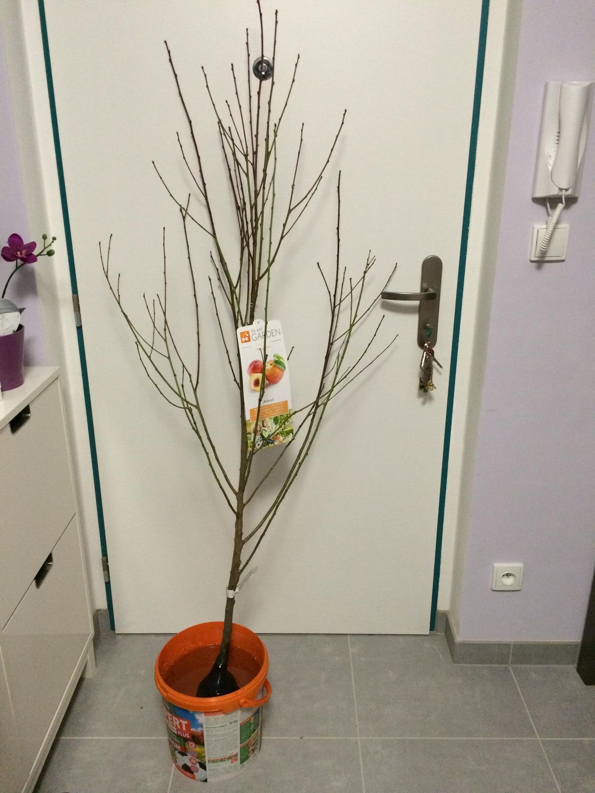 Zahradka nasa 2015 - A moja nova laska :-D