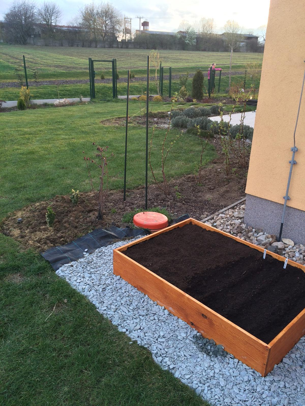 Zahradka nasa 2015 - Zasadena mrkva :)