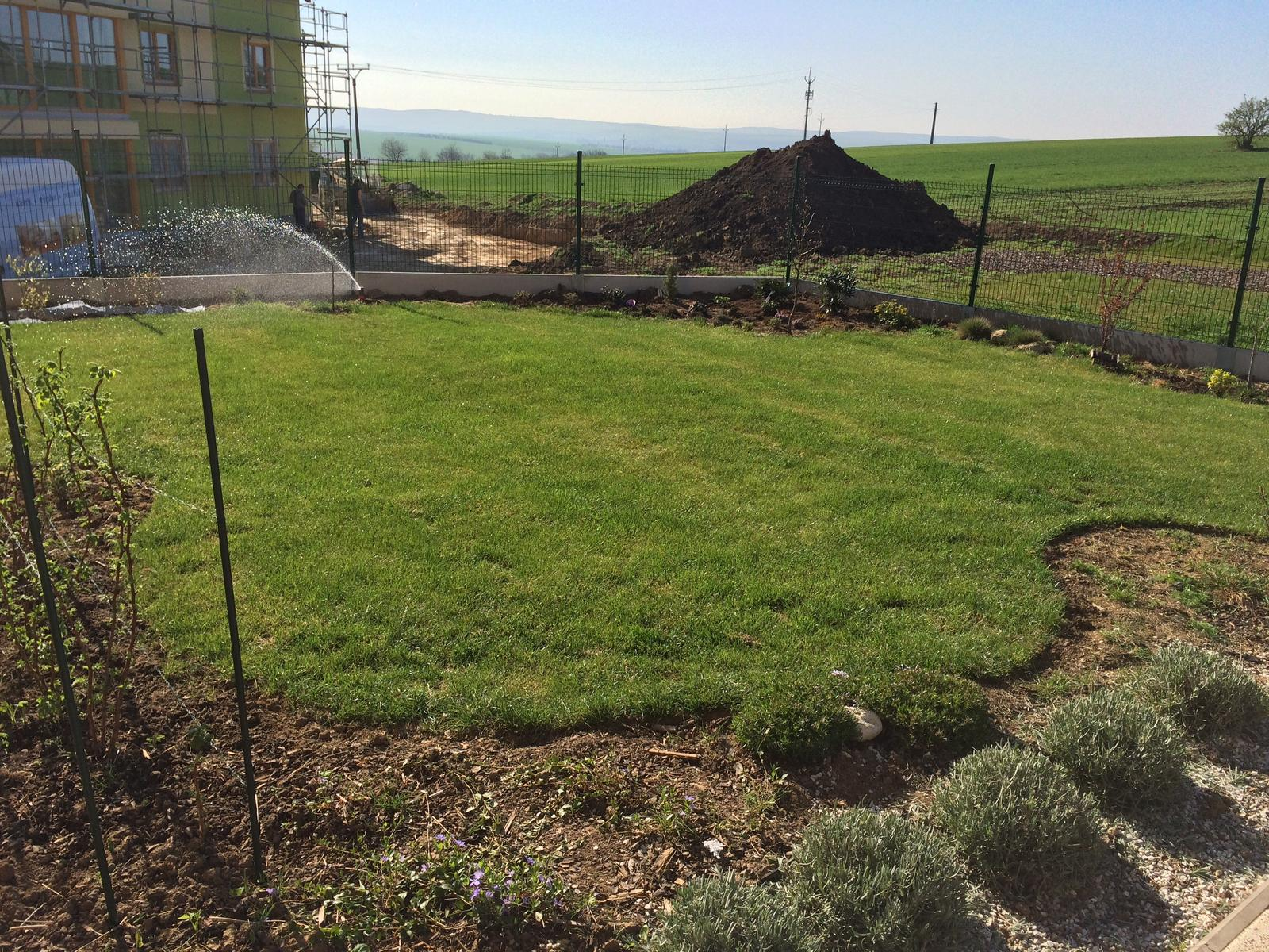 Zahradka nasa 2015 - zaciname zavlazovat.. dneska ma byt velke teplo, tak snad travicka poporoste :)