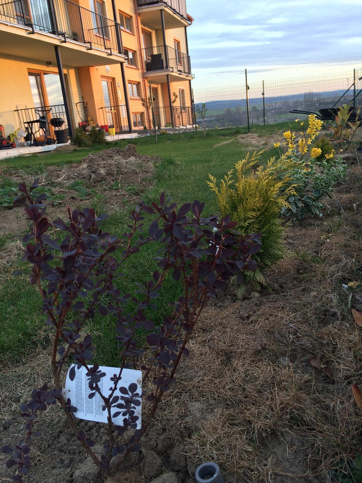 Zahradka nasa 2015 - z toho bude jednou zivy plot :)