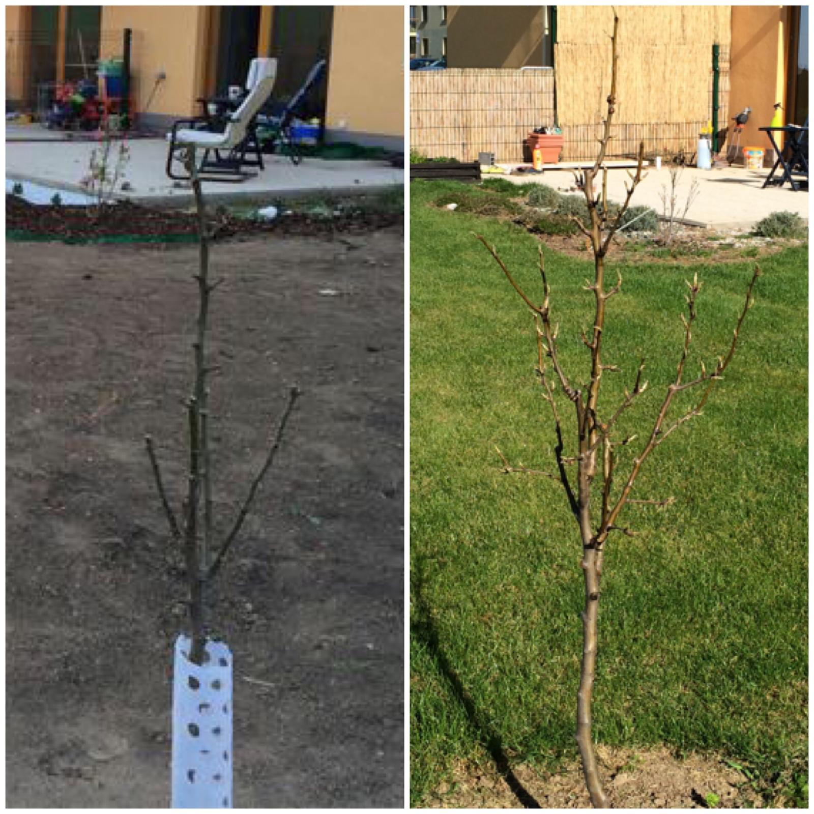 Zahradka nasa 2015 - o rok viac, o par konarov navyse :)