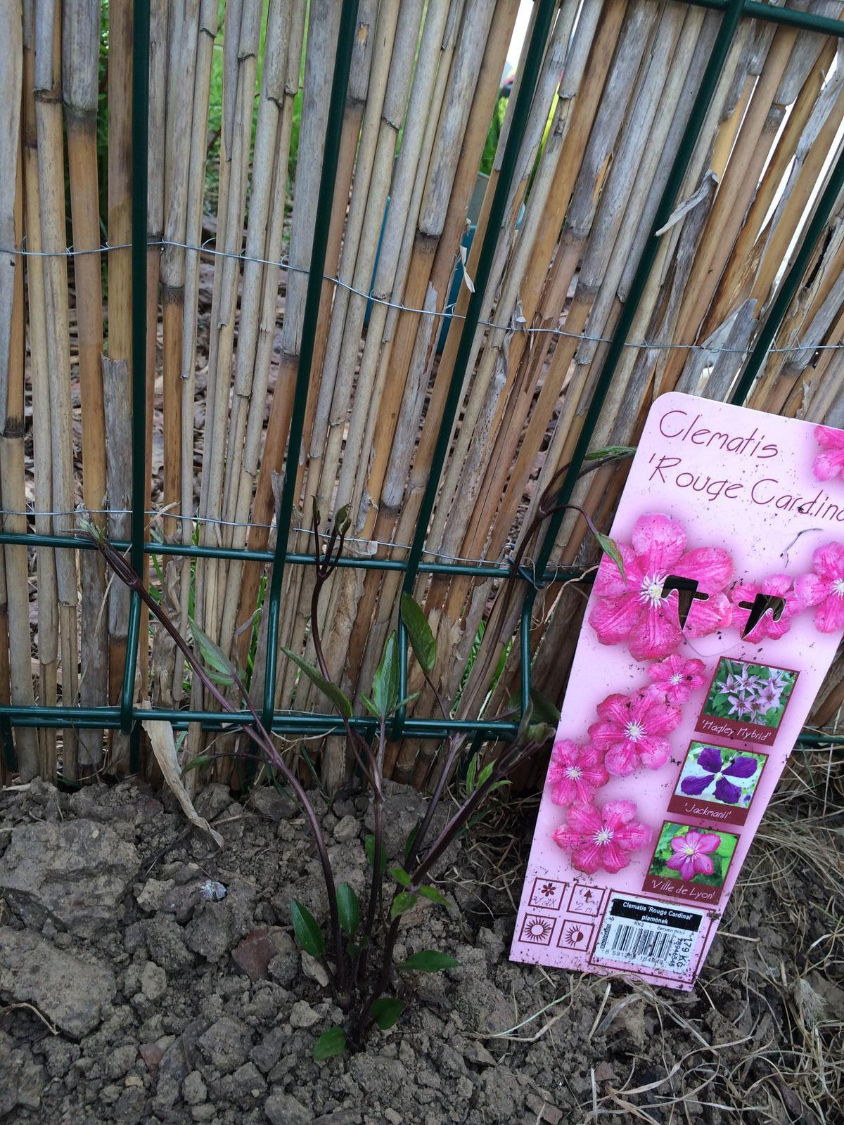 Zahradka nasa 2015 - uz zaciname zapletat :)