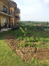 Este doplodia jahody a potom tu vznikne policko s vyvysenymi zahonmi..