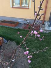 nektarinka :)