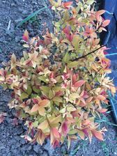 @astrid_sk takto vypadaju tie druhe.. tie som sadila minuly rok na konci leta tusim.. a budu sa istotne este strihat..