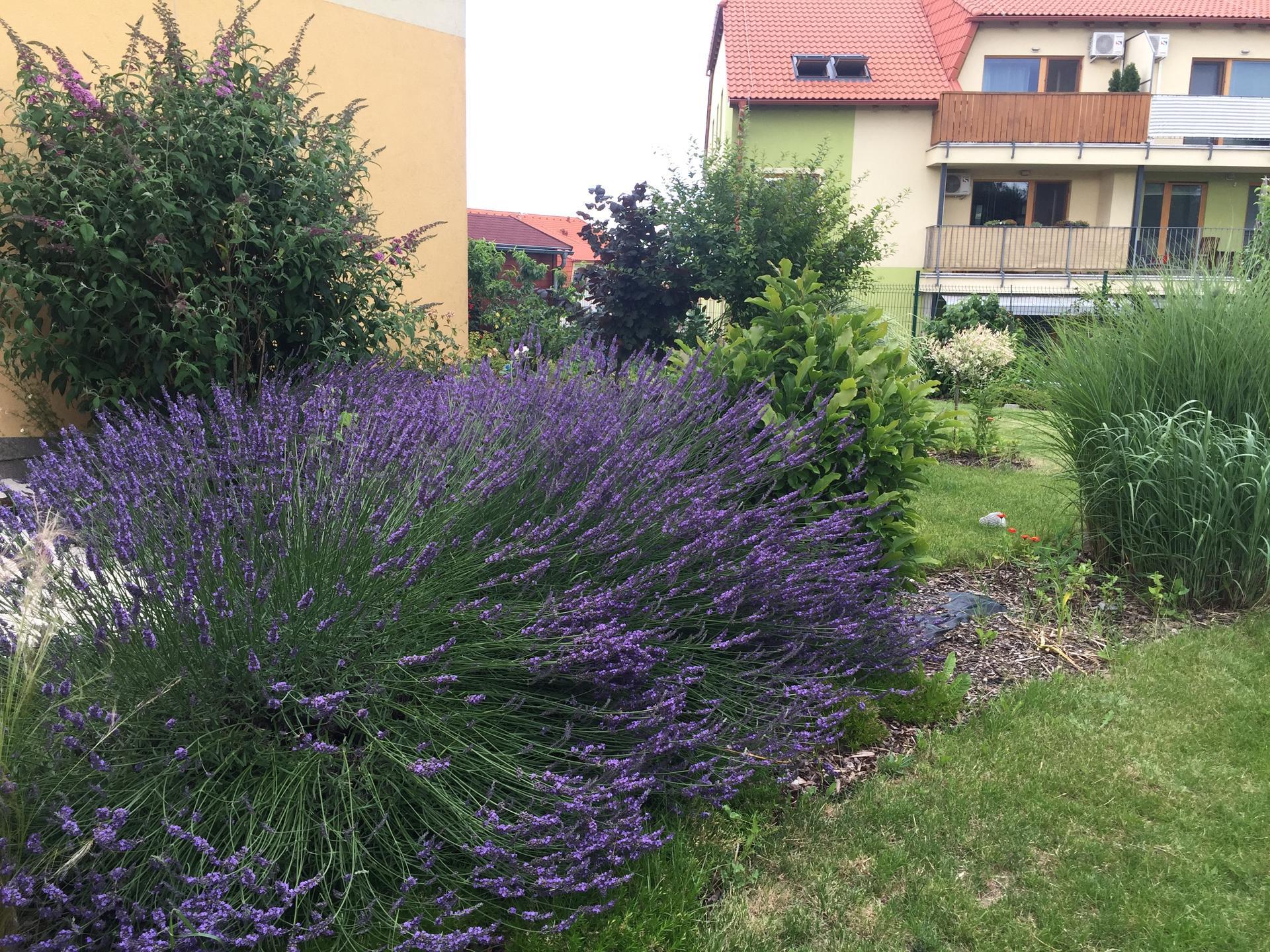Nase zahradka u bytu - po 6 letech - Obrázek č. 22