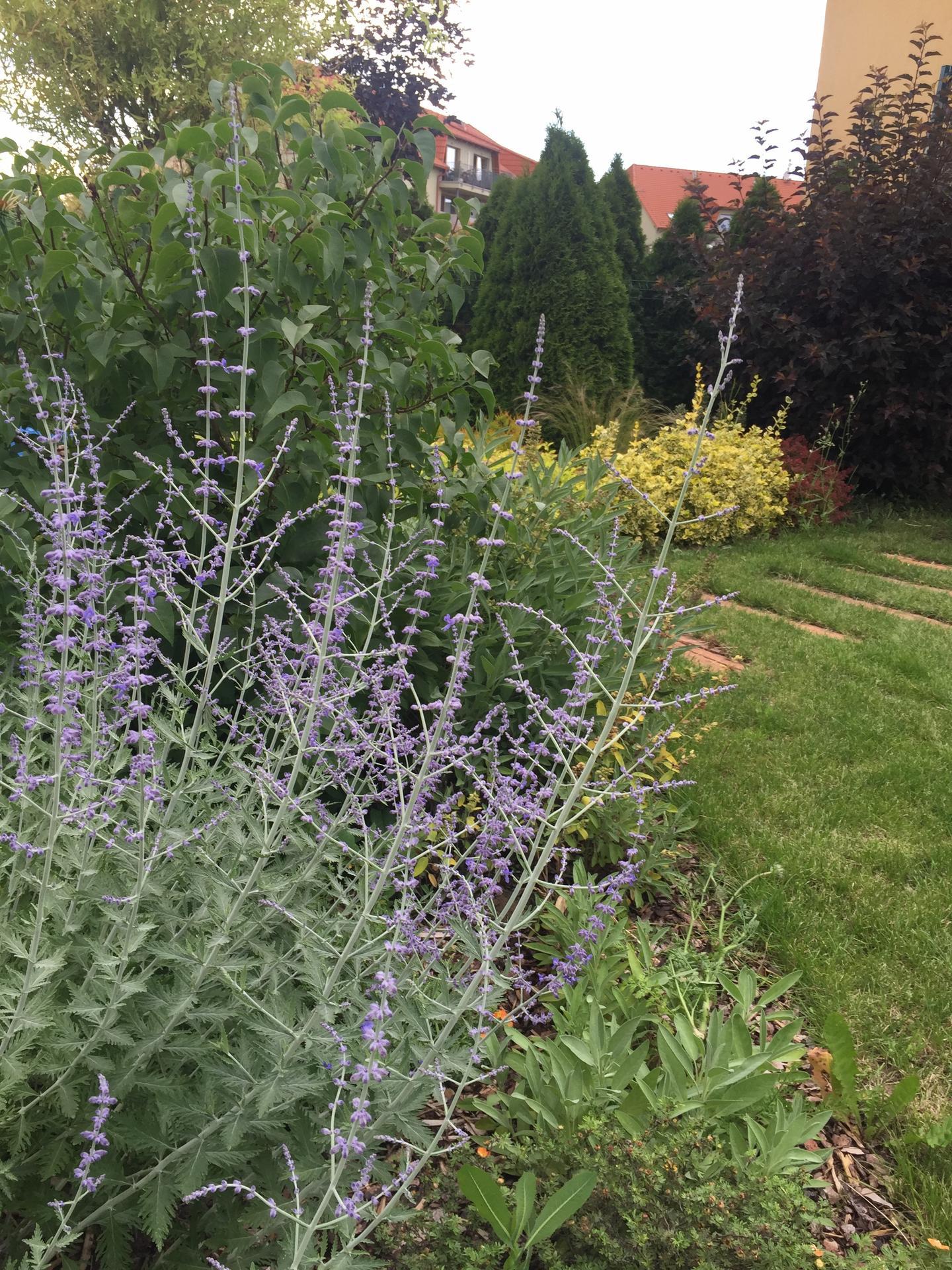 Nase zahradka u bytu - po 6 letech - Obrázek č. 23