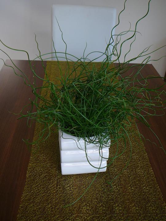 Čo je to za rastlina? - Obrázok č. 1