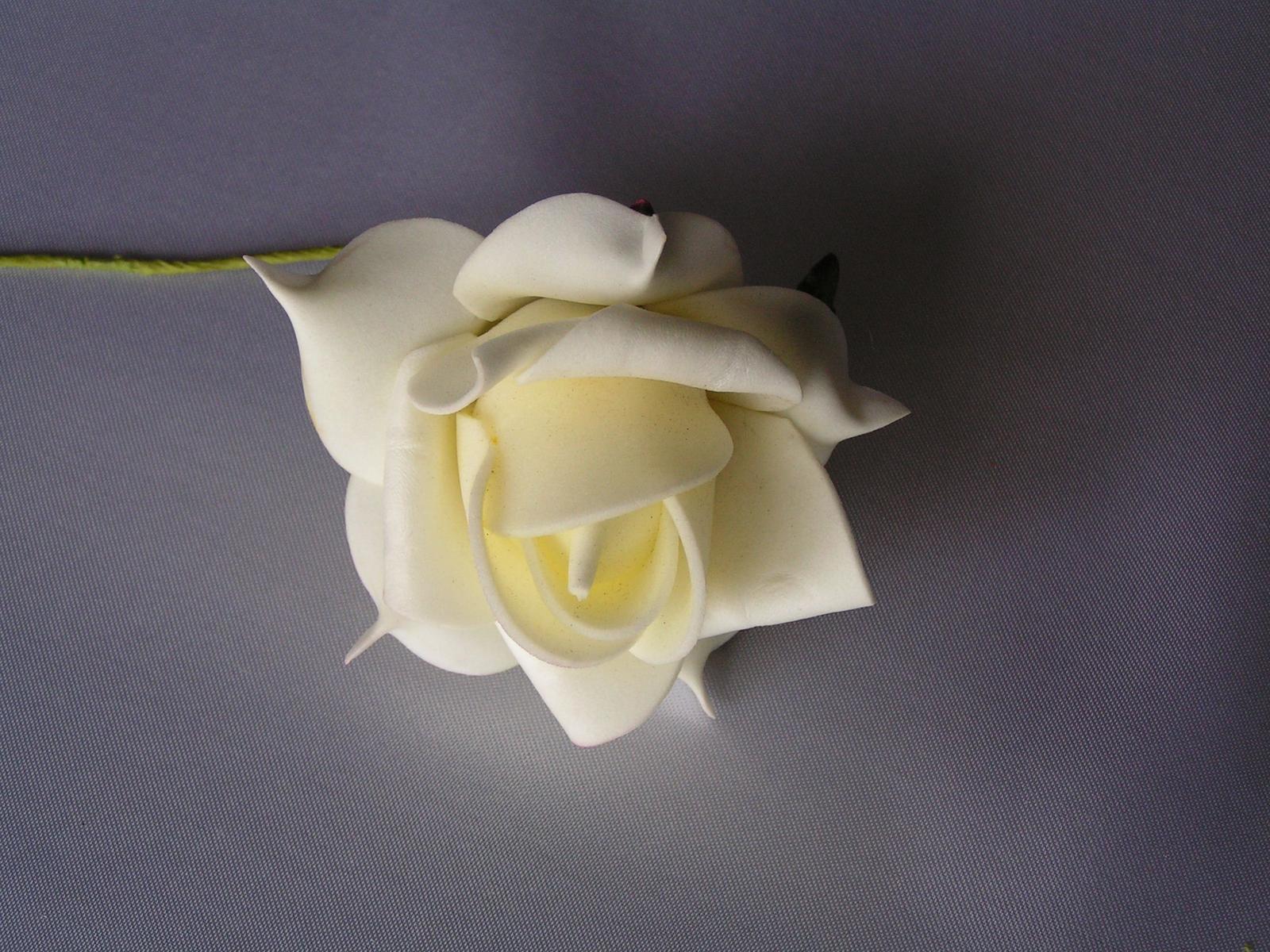 Krémové pěnové růže - Obrázek č. 1