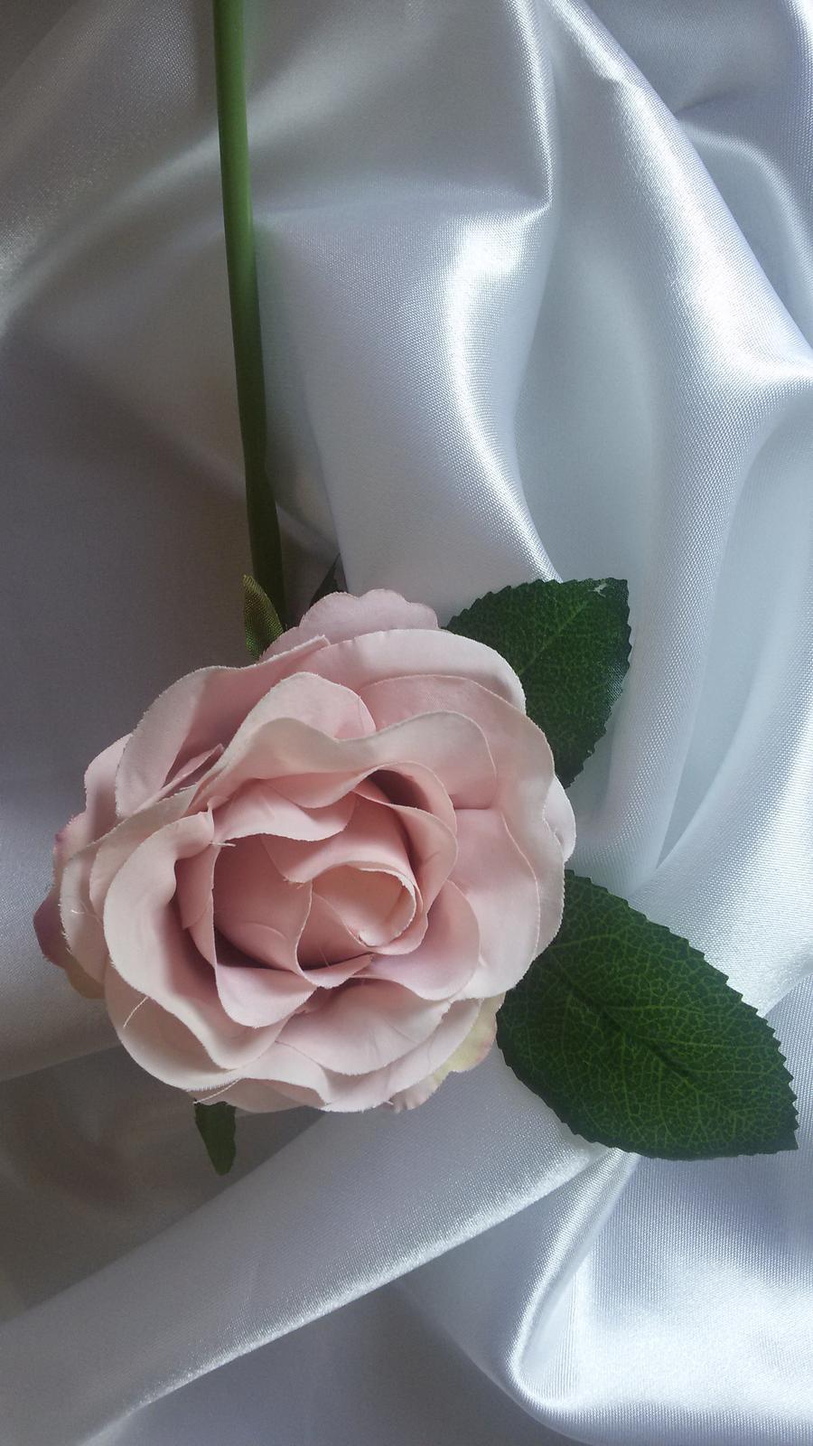 Růžová růže s listy - Obrázek č. 1