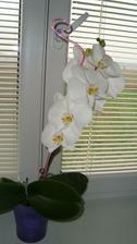 V novém domečku mi prvně vykvetla orchidejka:-)