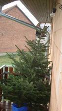 Náš letošní stromek, zatím na balkóně (jedlička-2,5m)