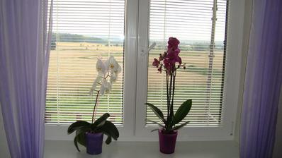 Malé radosti v ložnici aneb nová orchidejka