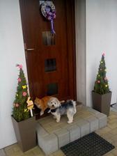 Původně zimní dekorace poslouží i na jaře :-). Asistuje náš zvěřinec...