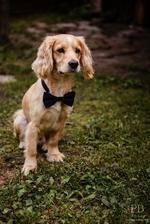 nemenší, nesladší a nejroztomilejší svatebčan..Teddy