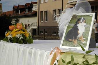 Toto je naša Klárička, ktorá nám žiaľ umrela mesiac pred svadbou :o( Tak bola na svadbe s nami aspoň takto ..