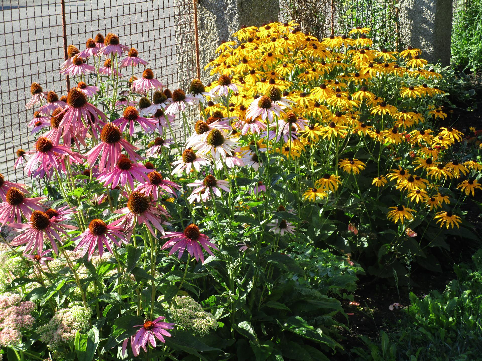 začínáme se zahradou - další třapatky