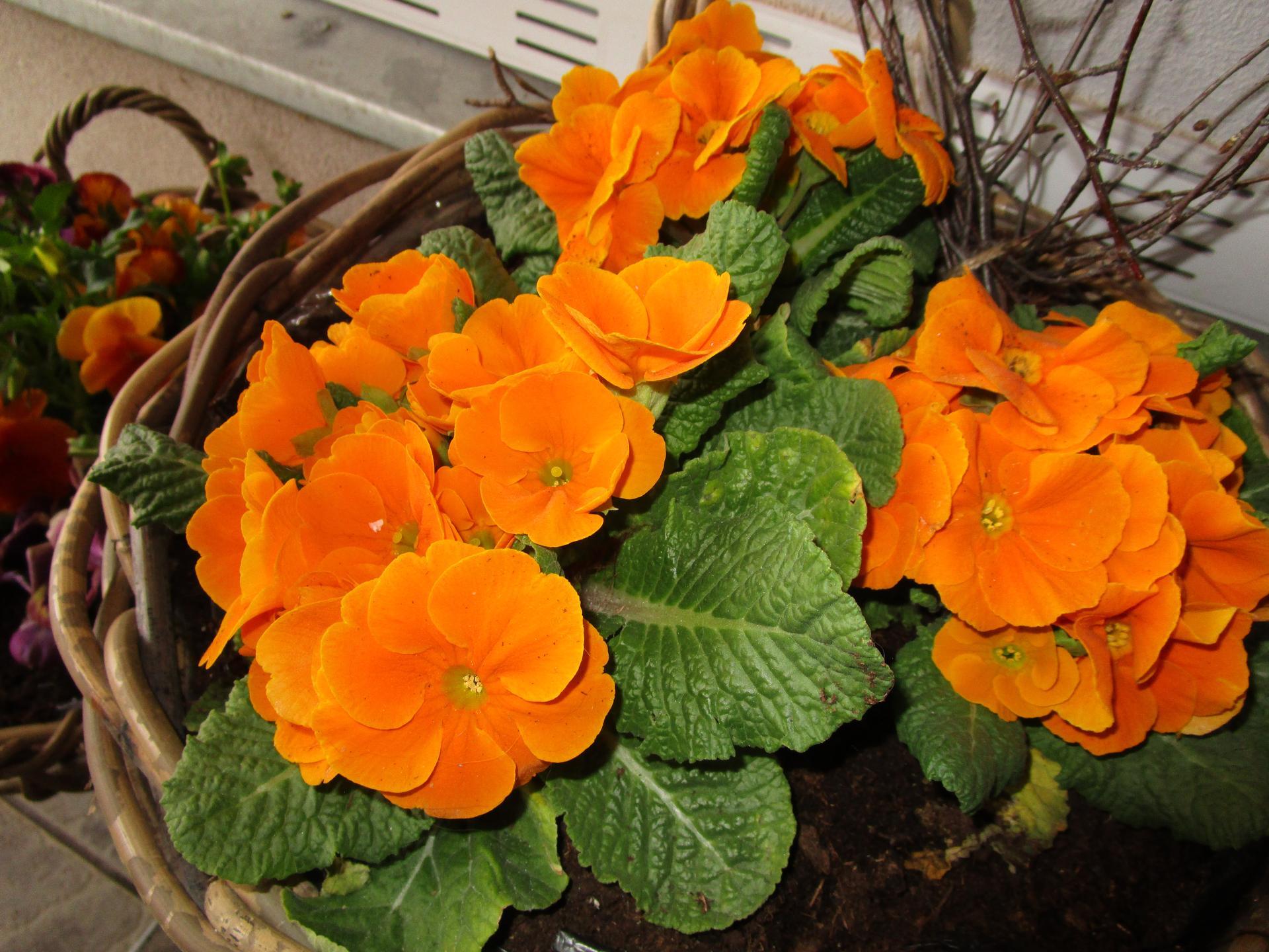 Vítáme jaro ... - Obrázek č. 1