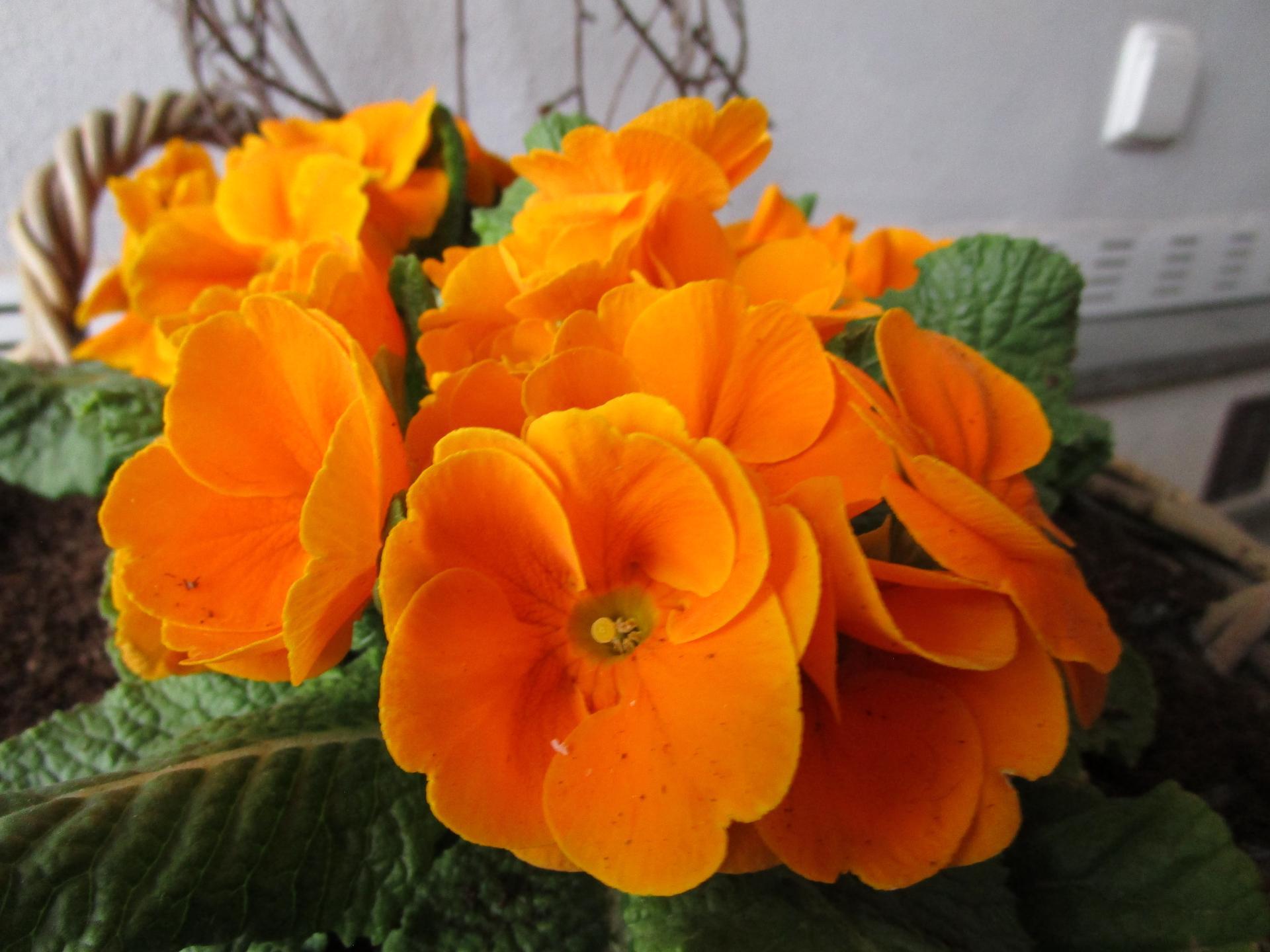 Vítáme jaro ... - Obrázek č. 2