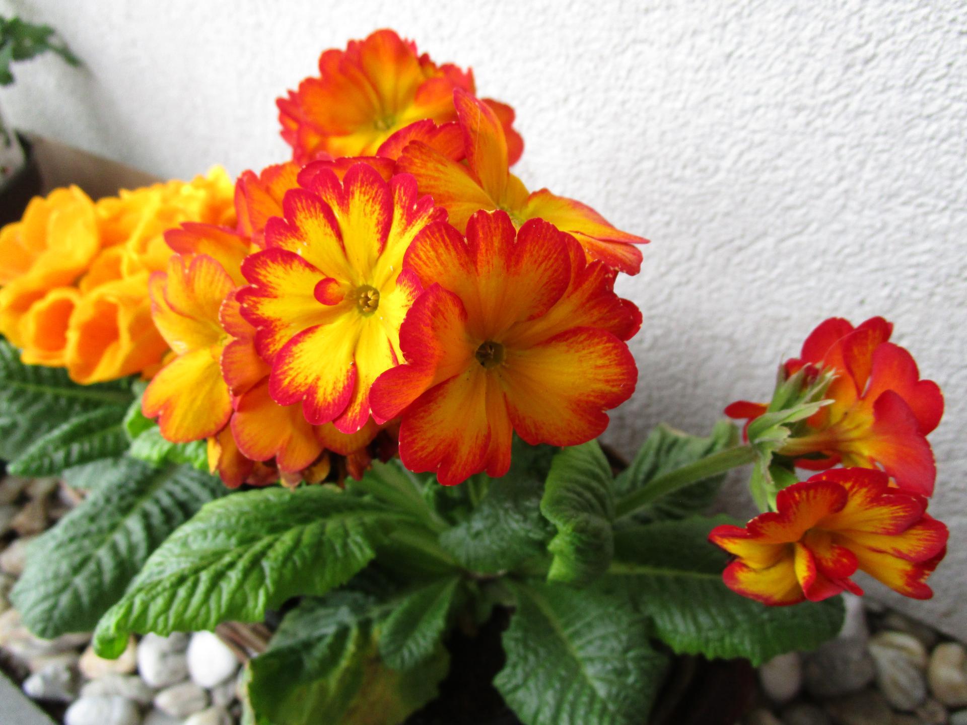 Vítáme jaro ... - Obrázek č. 3