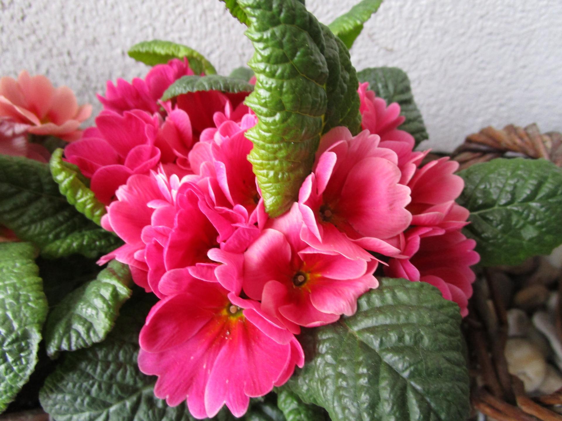 Vítáme jaro ... - Obrázek č. 4