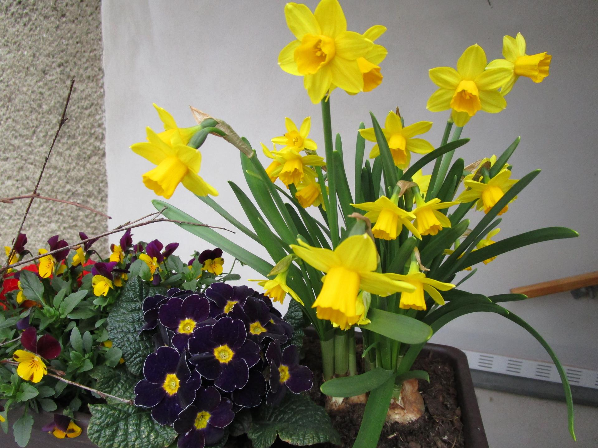 Vítáme jaro ... - Obrázek č. 6