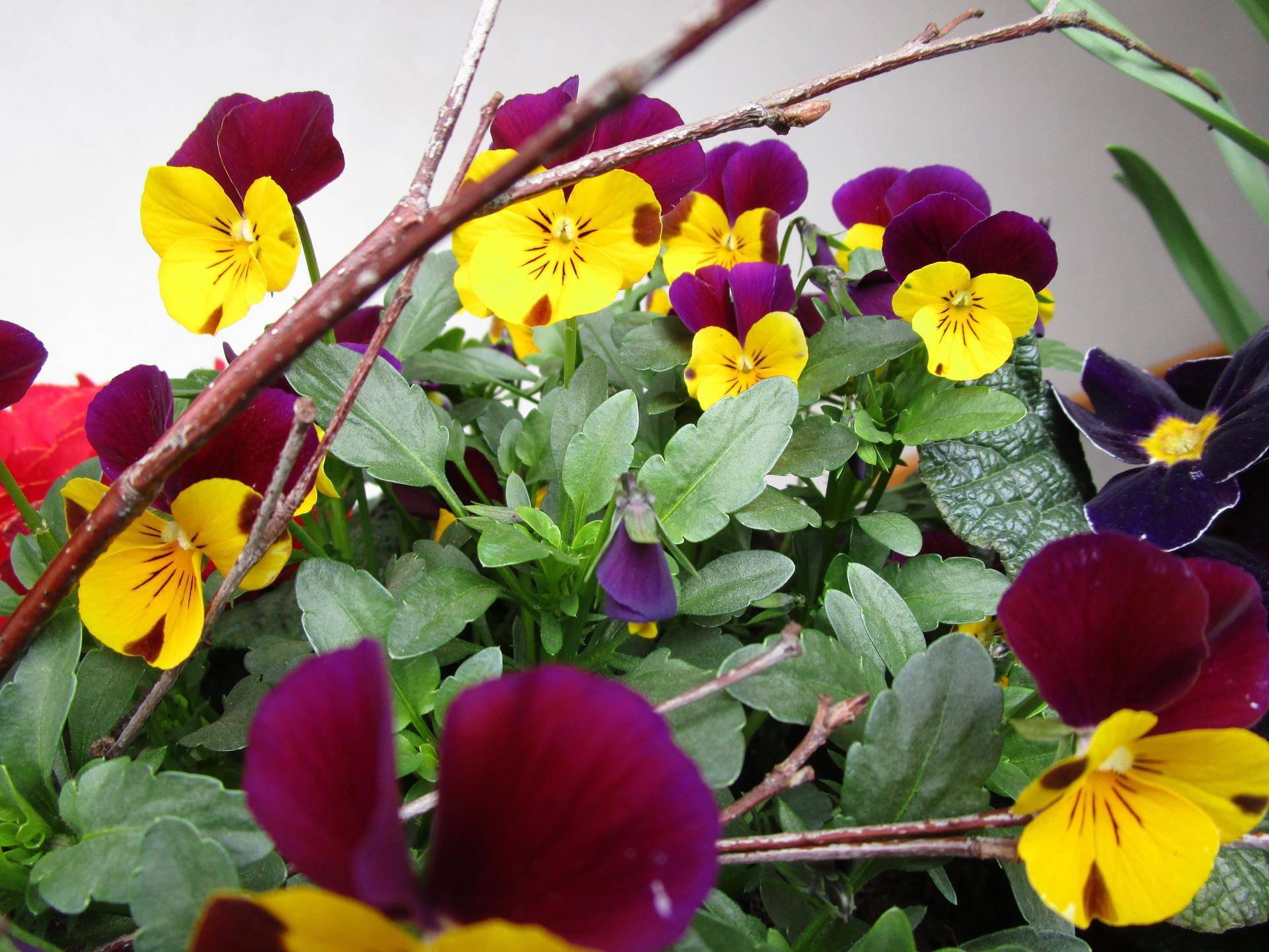 Vítáme jaro ... - Obrázek č. 7