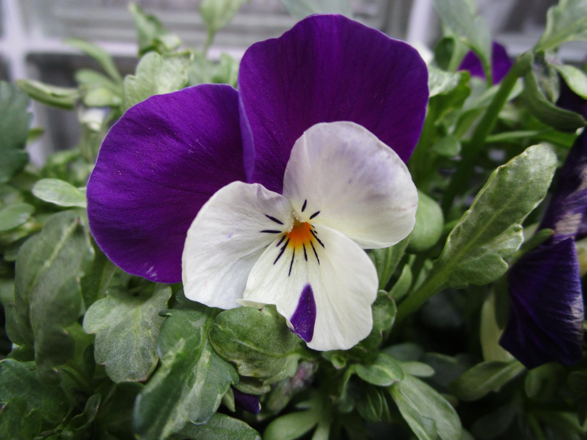 Vítáme jaro ... - Obrázek č. 8