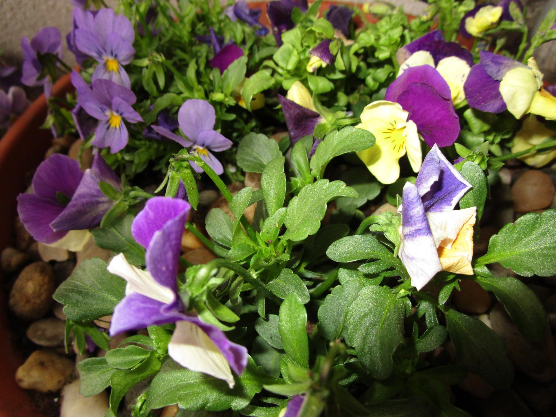 Vítáme jaro ... - Obrázek č. 9
