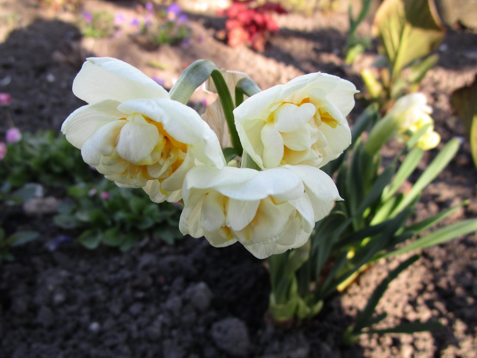 Vítáme jaro ... - Obrázek č. 10