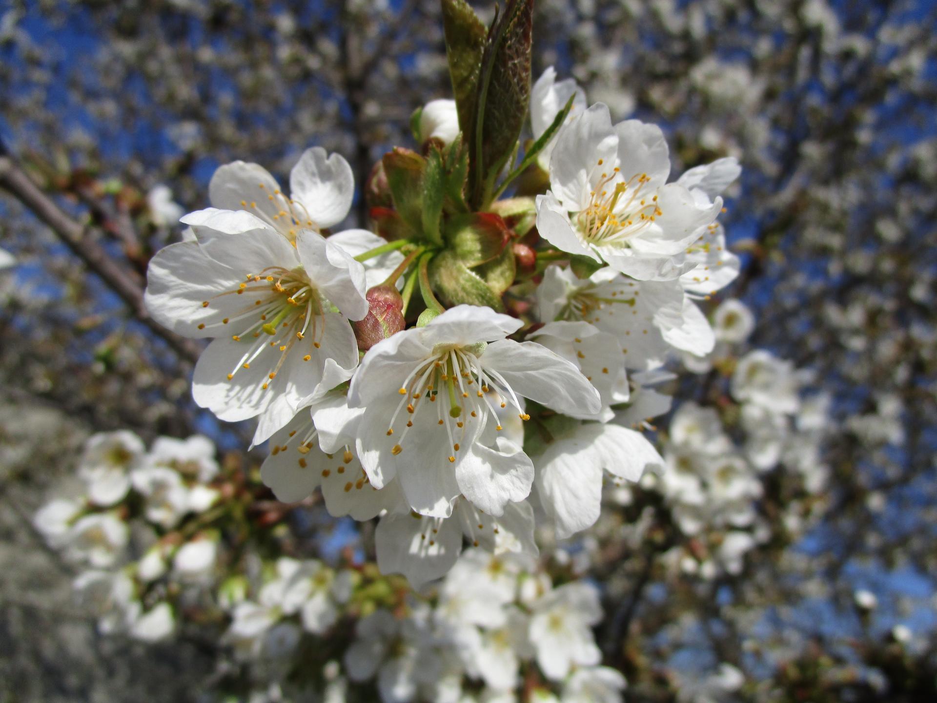 Vítáme jaro ... - Obrázek č. 11
