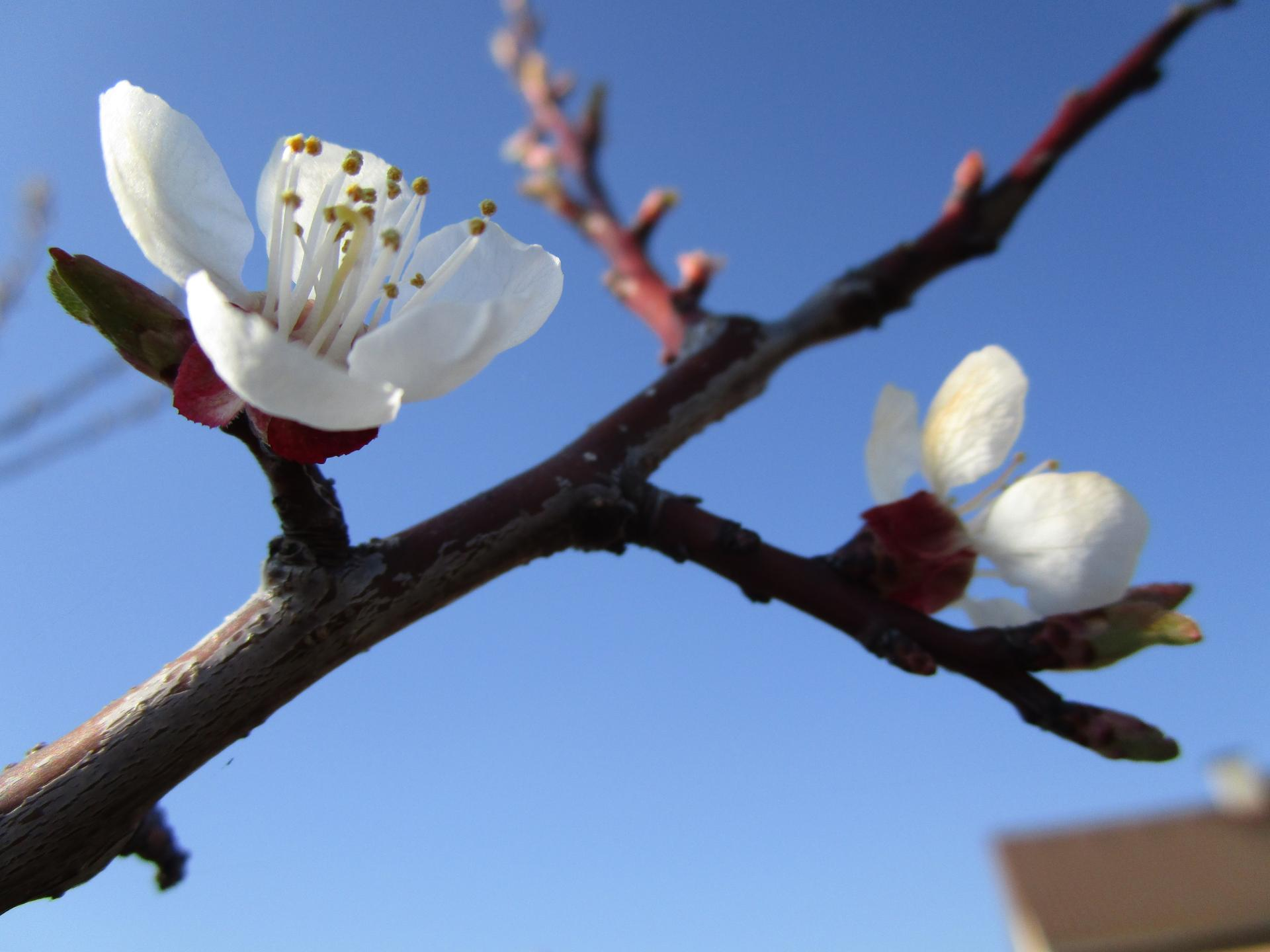 Vítáme jaro ... - Obrázek č. 12