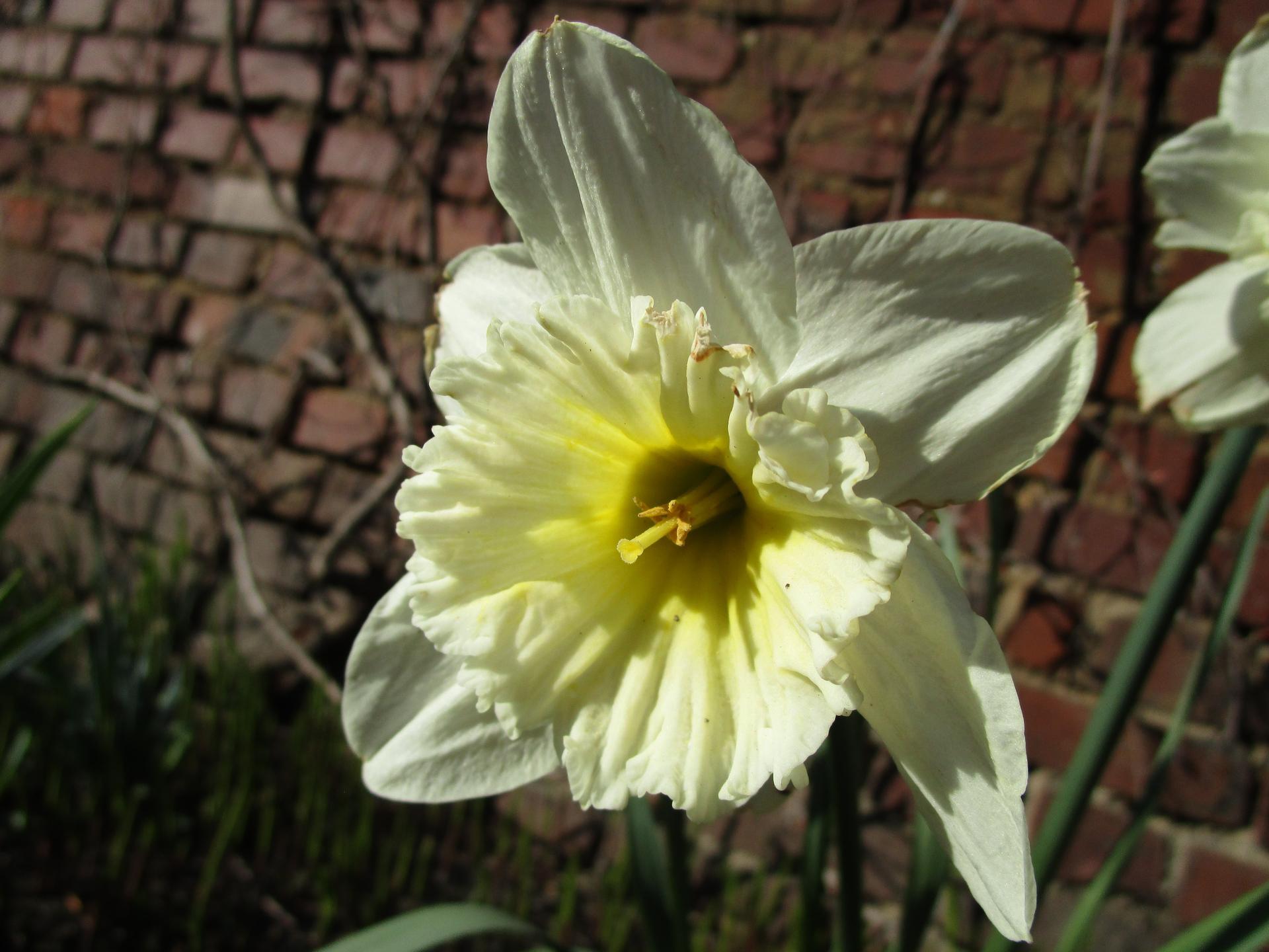 Vítáme jaro ... - Obrázek č. 14