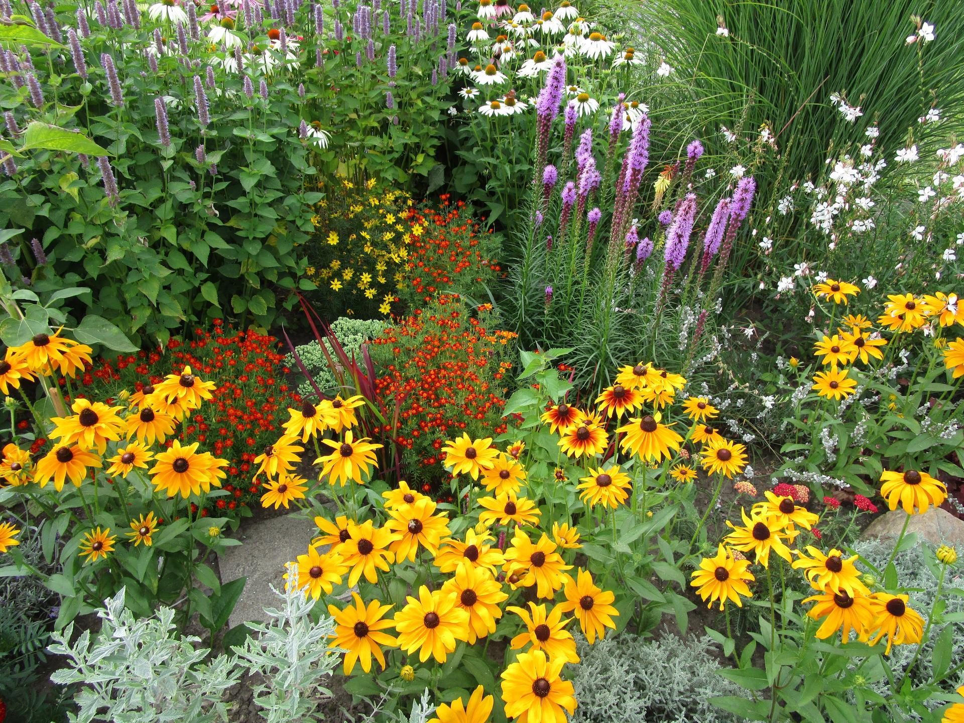 zahrada 2021 - záhon v květu