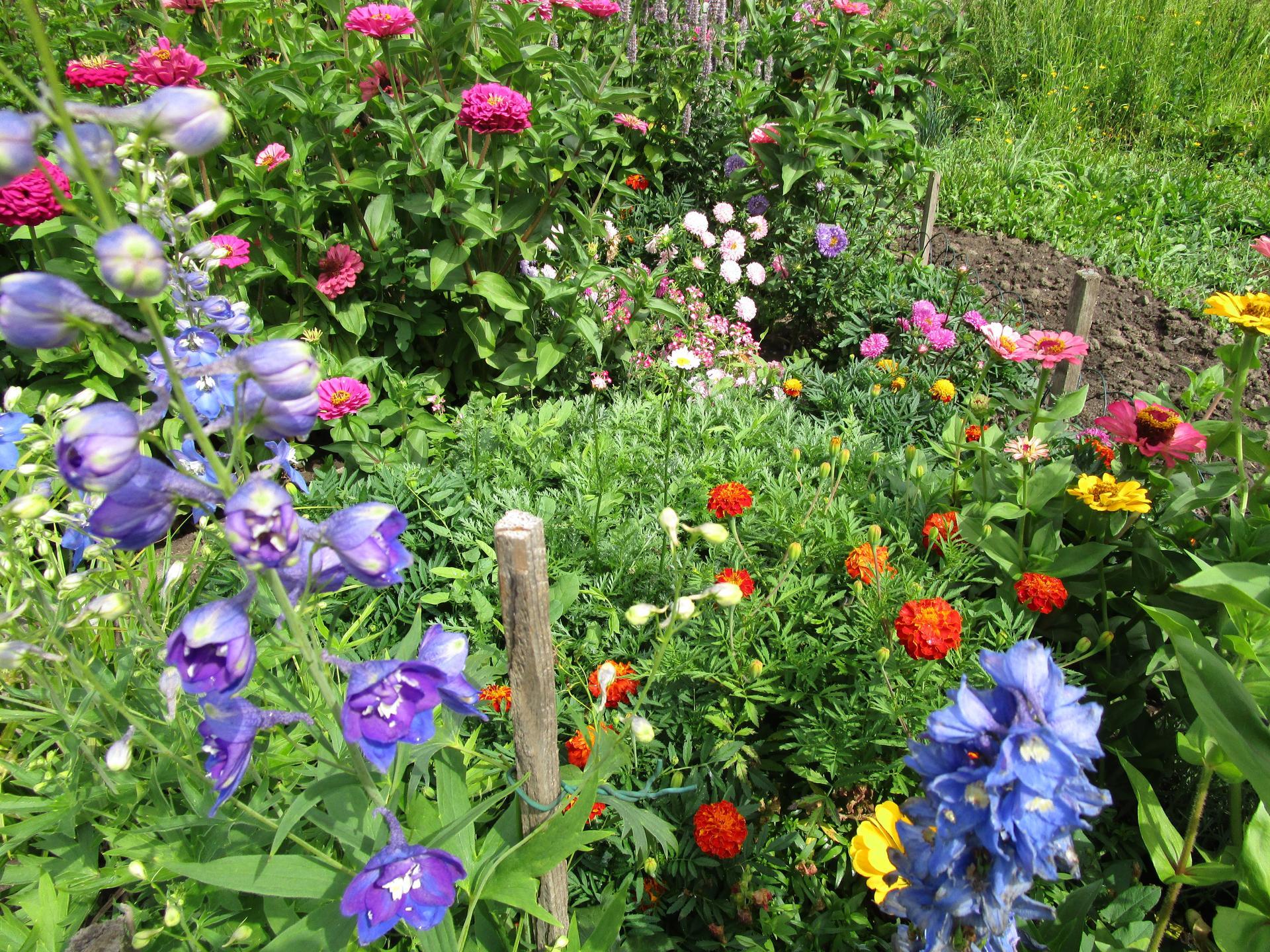 zahrada 2021 - letničkový