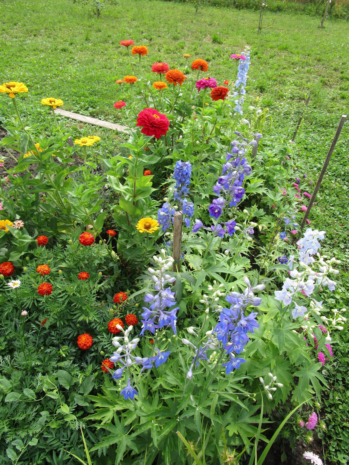 zahrada 2021 - ještě jednou letničkový