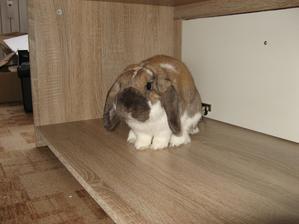 Skládáme obývací stěnu, jen náš Ferdíček to pochopil tak, že je to jeho nový bejvák . - ))