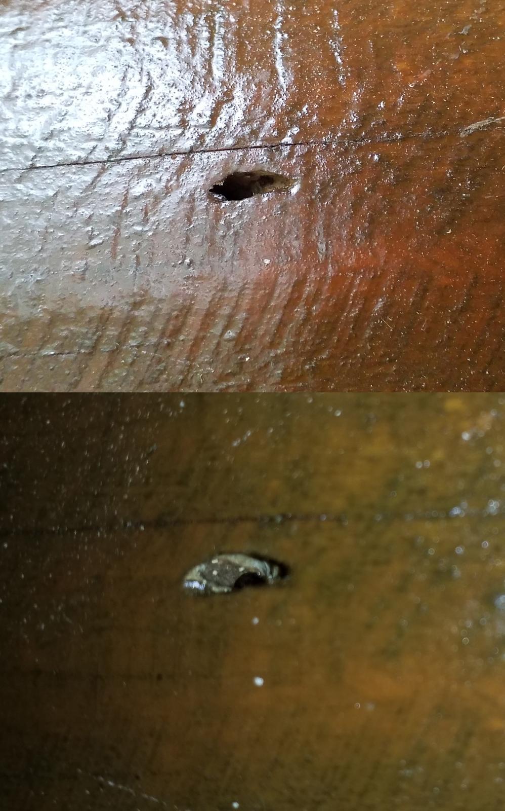 @obludak Jako okřídlený mravenec... - Obrázek č. 2