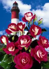 tyto růže
