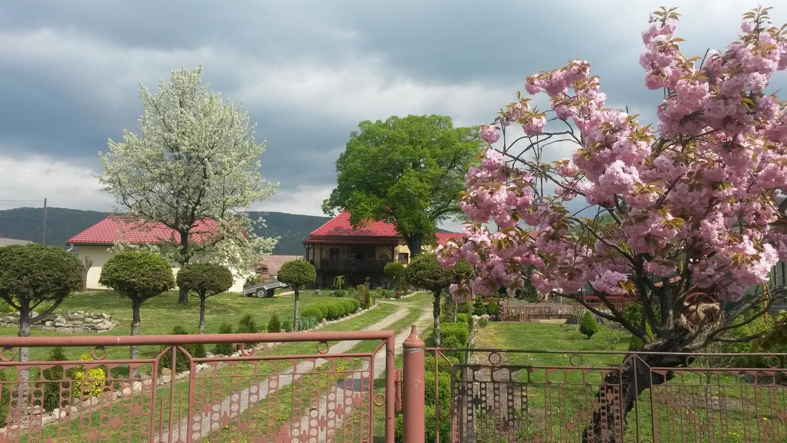 Konečne bývame :D - milujem jarne prebudzanie stromov