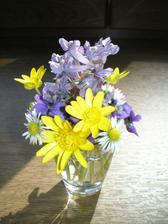 kvetinky z nasho dvora...