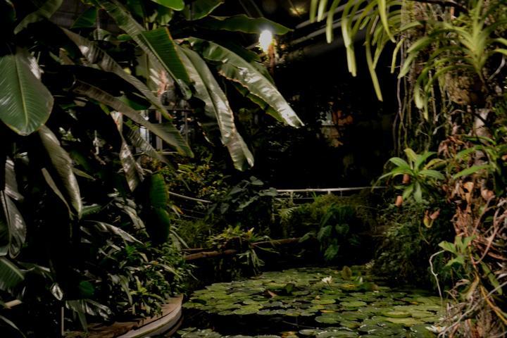 Oskeruše Maryšová{{_AND_}}Lycium Čagan - tropický skleník botanické