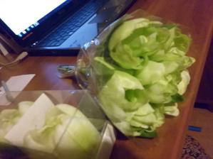 aj kytička zelených tulipánov sa využije