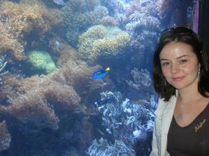 To jsem já... Zoo 2008