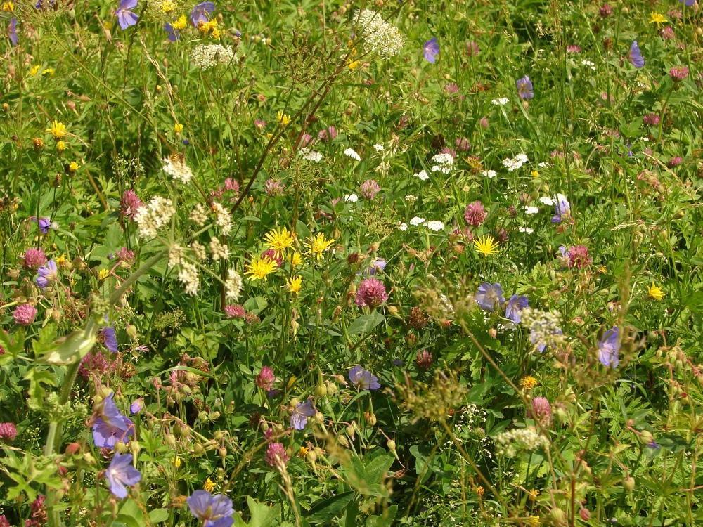 Zahrada - inspirace - Květnatá loučka od Planta naturalis