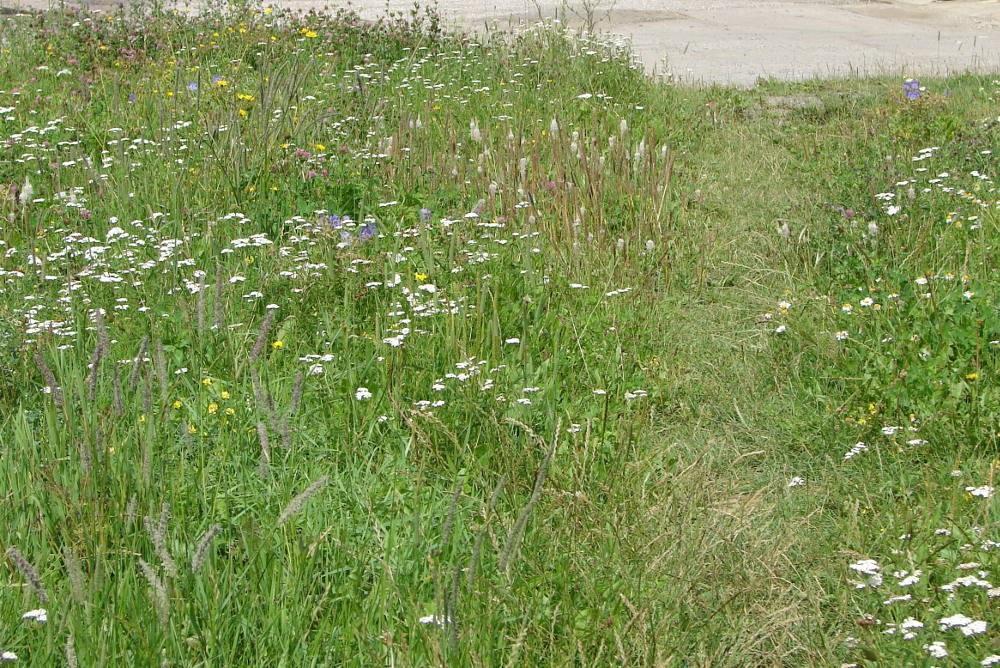 Zahrada - inspirace - Zelený chodníček od Planta naturalis