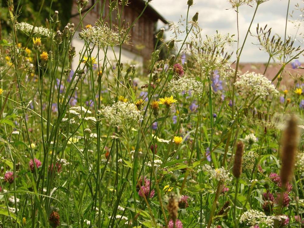 Zahrada - inspirace - Louka pro motýly od Planta naturalis