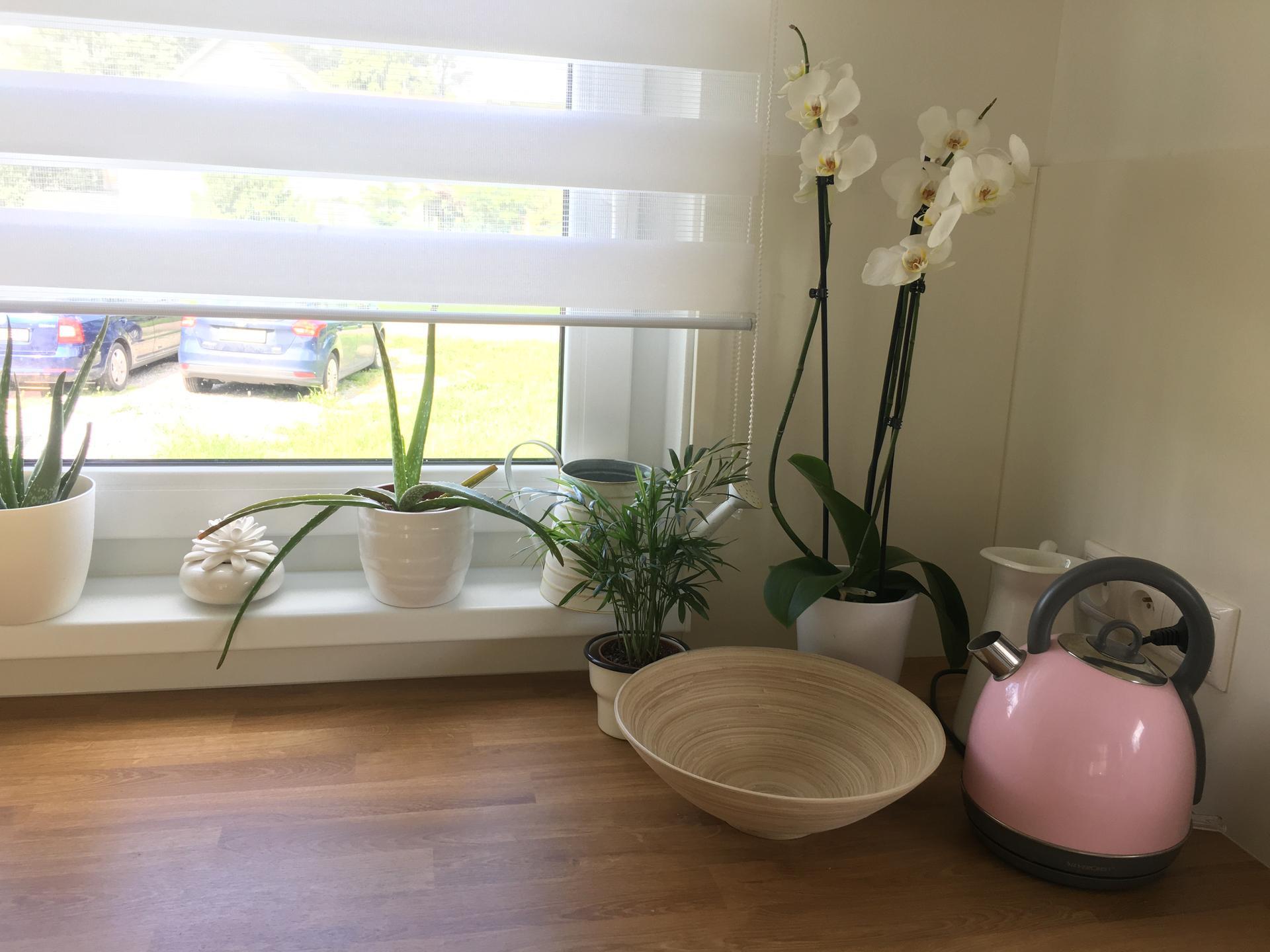 Naše kuchyň 2020 - Nový přírůstek orchidejka